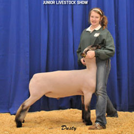 Despain Winner - Grand Champion Market Lamb